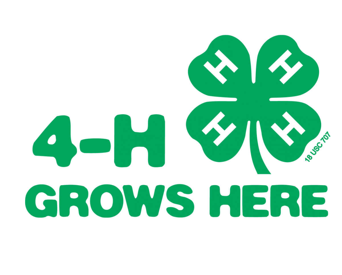 4-H Grows Here Clover